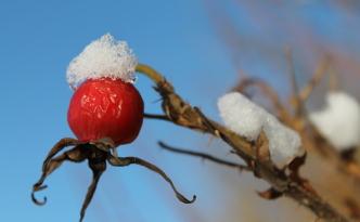 Vinter på Tomelilla Golfbana